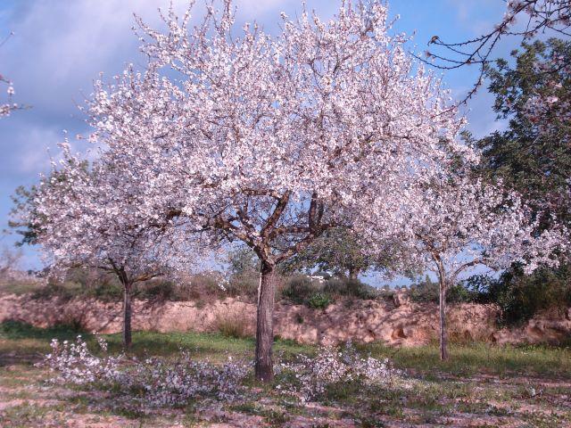 Arboles en flor fotos de granada y su provincia for Arbol granada de jardin