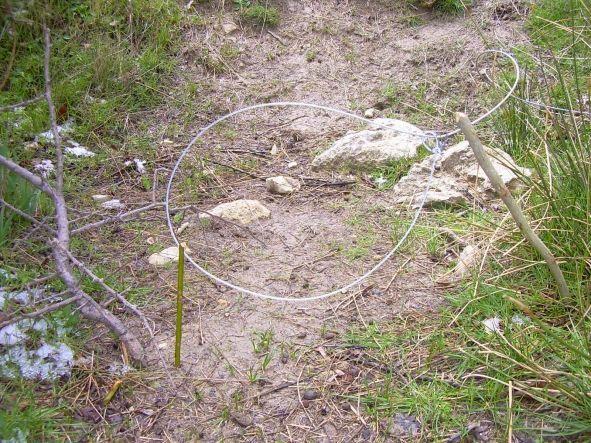 Trampas para animales fotos de fotodenuncias - Trampas para ratones de campo ...