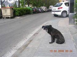 Perra abandonada en la carretera de Granada