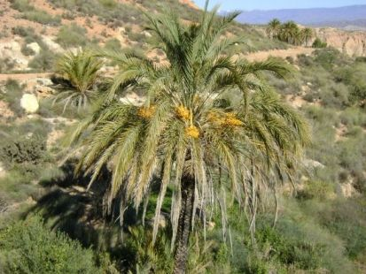 bonita palmera