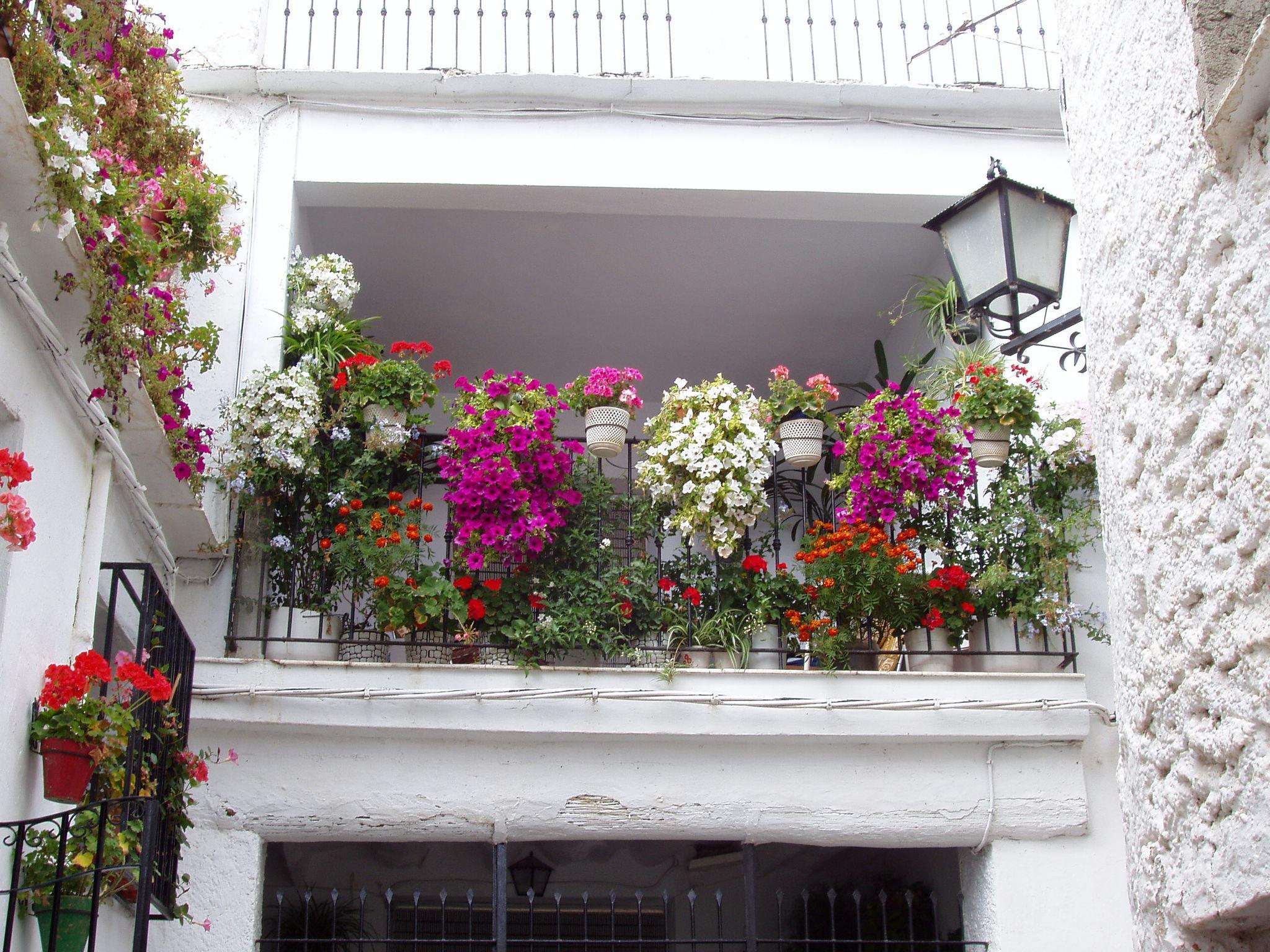 Balcon con flores fotos de granada y su provincia for Balcones decorados con plantas