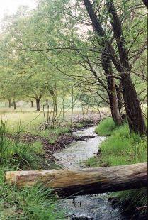 el paso del arroyo