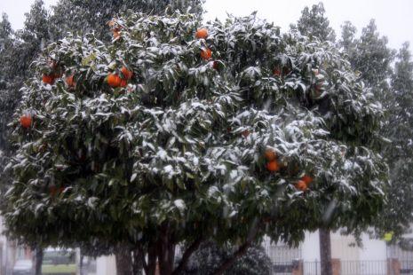Naranjo blanco