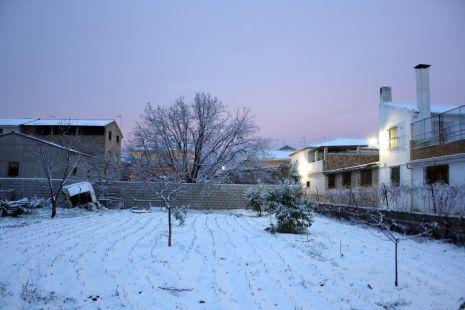 Ajos nevados y árbol en medio