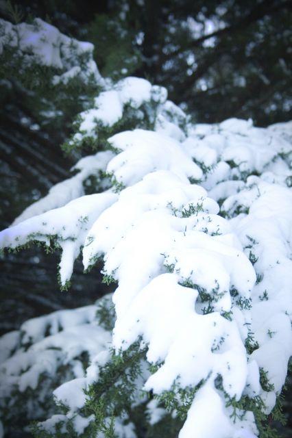 Manta de Nieve
