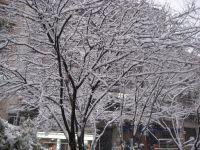 Efectos de la nevada