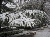 Arbol nevado
