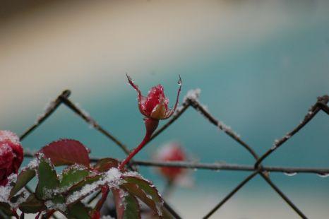 prisionera del frio