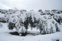Manto blanco sobre el olivo