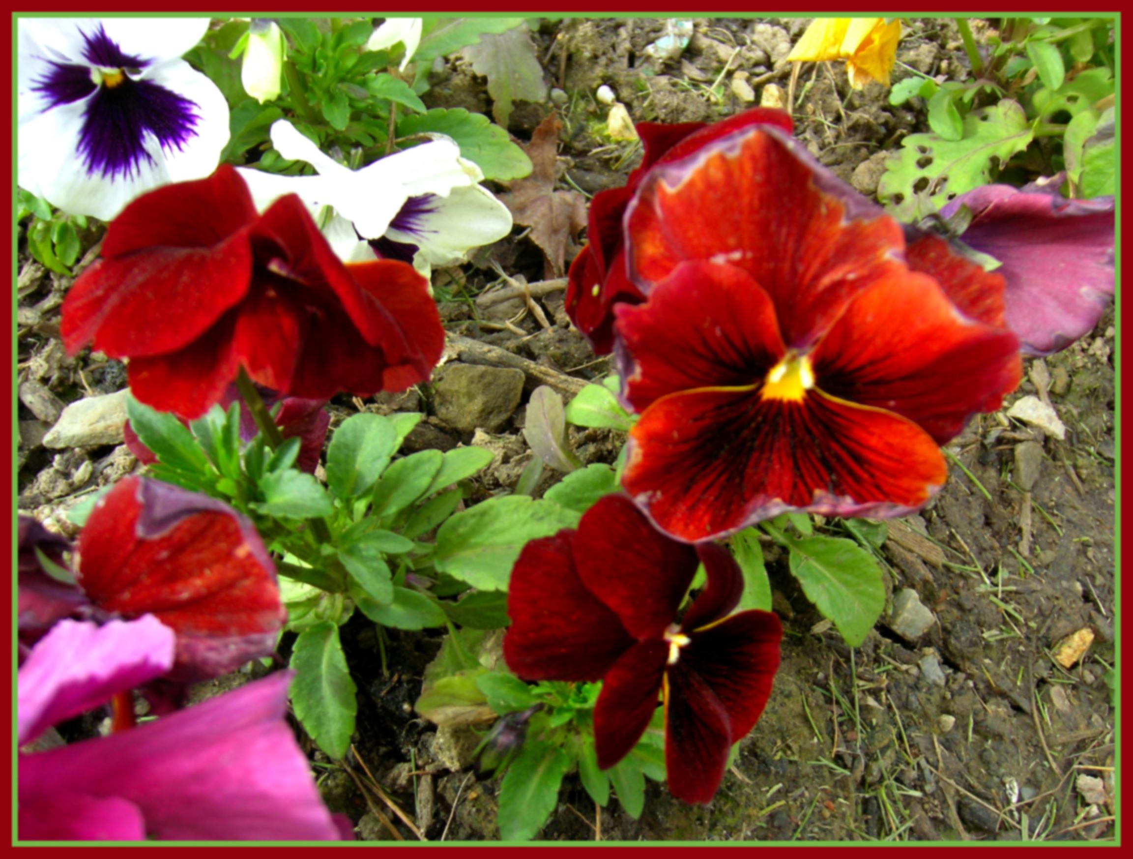 plantas jardins flores:Descarga la foto en su tamaño original © Todos los derechos