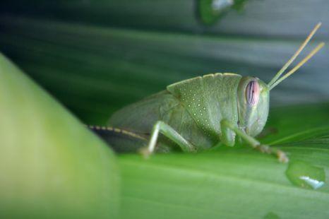 camuflado al fresquito