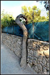 El árbol curioso