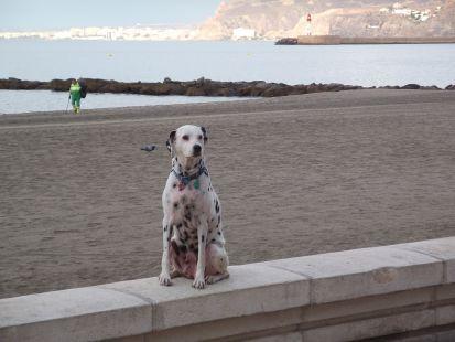 el perro en la playa
