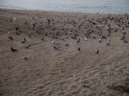 las palomas  en la playa