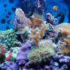 acuario marino nano