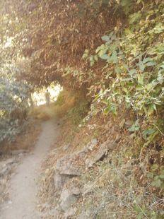 Camino de las moras.