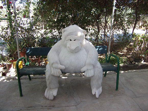 el goril,on blanc