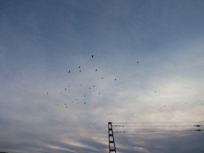 las aves