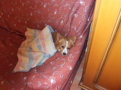 el perrito descansa