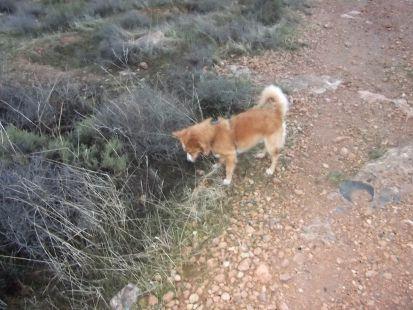 el perrito busca
