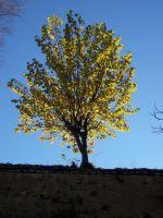 otoño en el  cielo