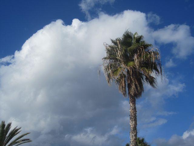 Palmera mirado las nubes