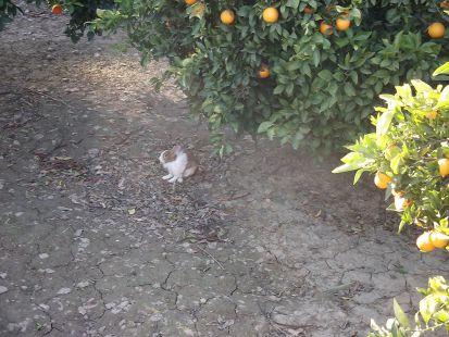 el conejo peri