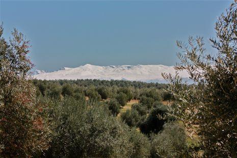 Sierra nevada y su mar de olivos