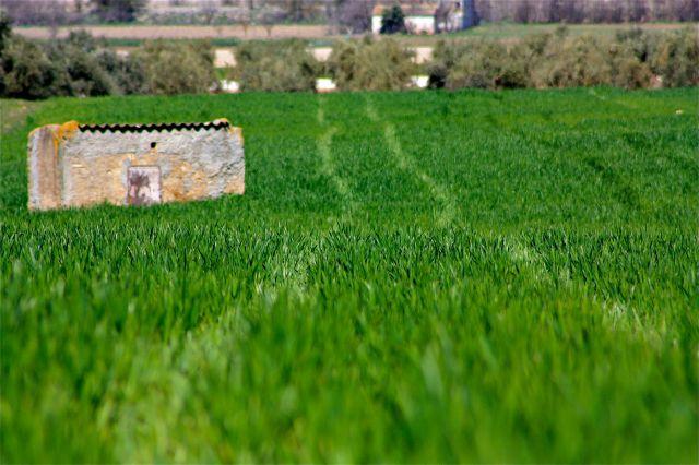 Verde trigo