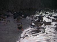Atardece en la laguna