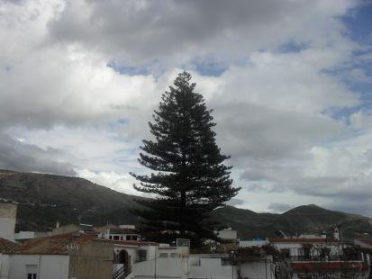 vista de orgiva , y al fondo la montaña y un gran arbol