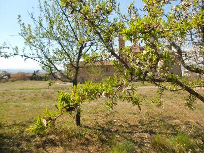 Cartuja primaveral