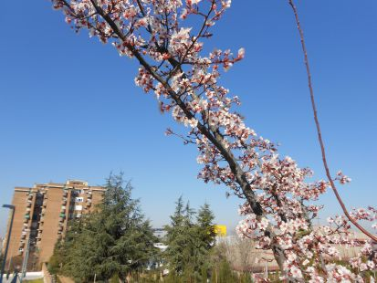 Terraza Gutierre Tibón.. primavera