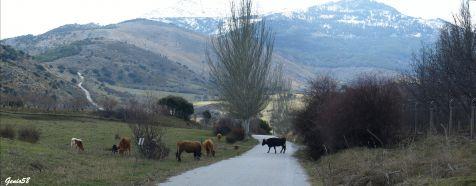 Carretera del Purche