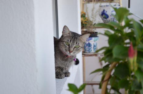 Agallas y su balcón