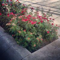 Flores Gran Vía