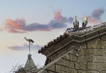 Cigüeñas en Malpartida