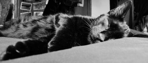El Mago durmiente...