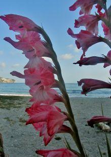Mar y Flores
