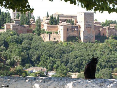 Dos preciosidades el gato y la Alhambra