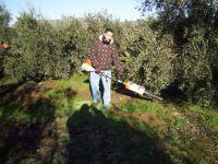 Escoznar y sus oliveros