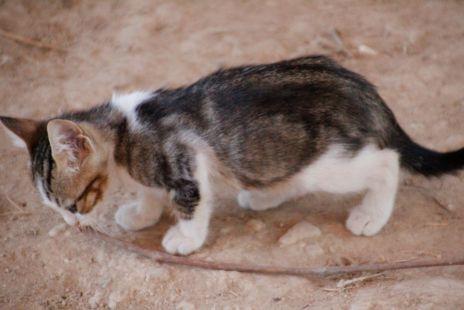 Gatos del secadero