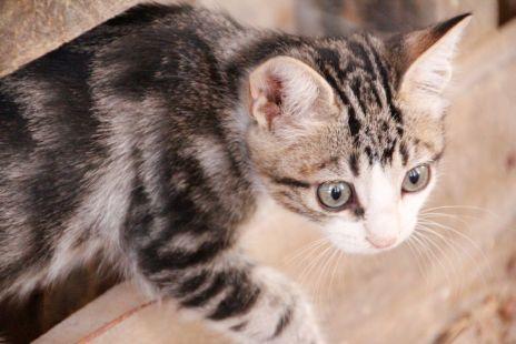 Los gatos del secadero