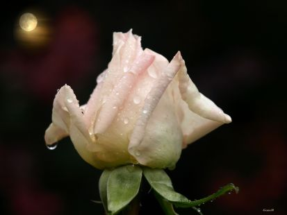 La luna y la rosa del Parque Garcia Lorca