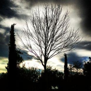 Árbol de Nube