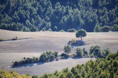 Dehesas y Sierra de Hu�scar