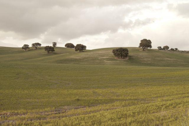 campos de montefrio