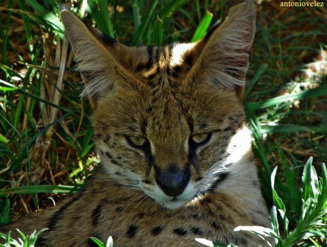 Reserva de animales salvajes en Sudáfrica
