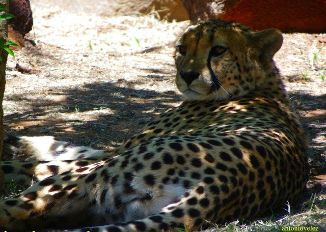 Reserva de animales salvajes de Sudáfrica