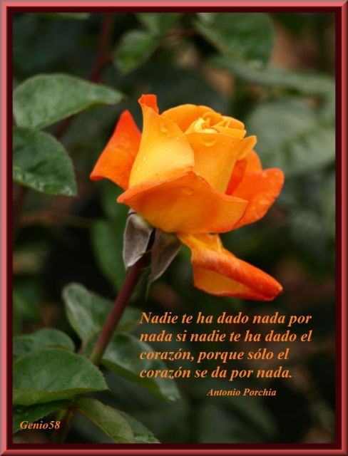 Rosas del Parque Garcia Lorca